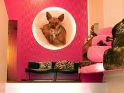Archisio - Matstudio Dressupyourhome By Matstudio - Progetto 06 for pets only milano