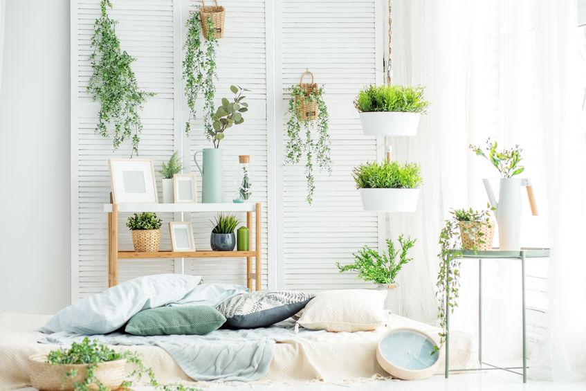 Piante e vegetazione nello stile hipster