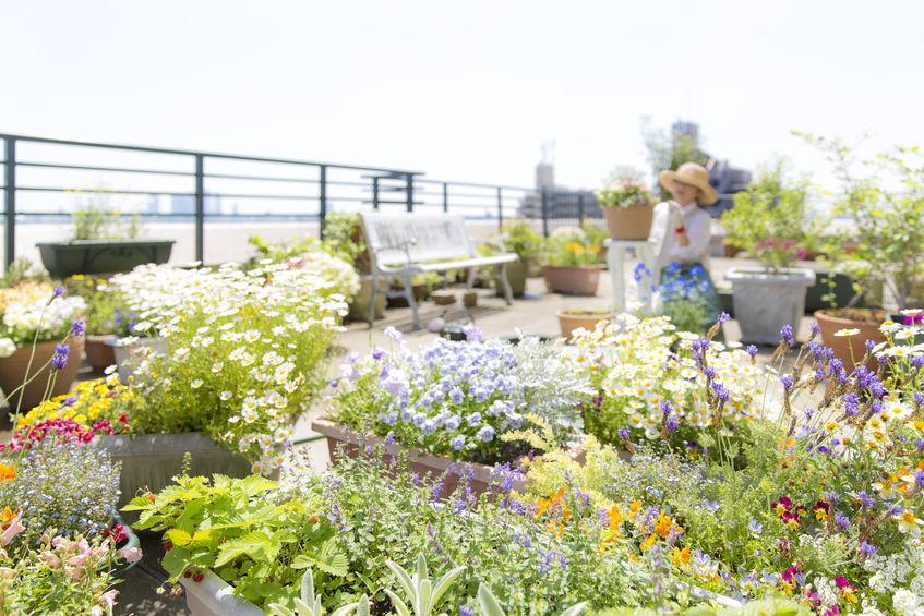 realizzare giardino sul tetto