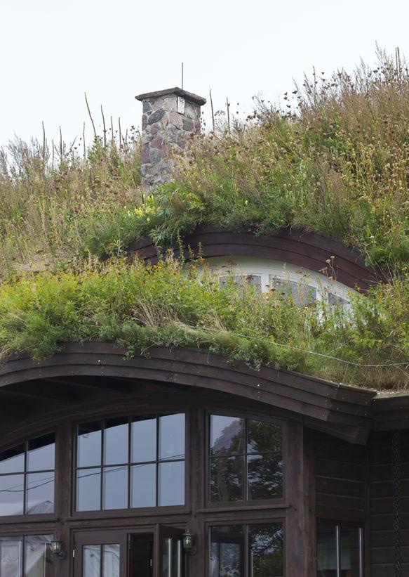 copertura con piante