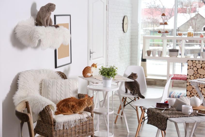 mobili per animali