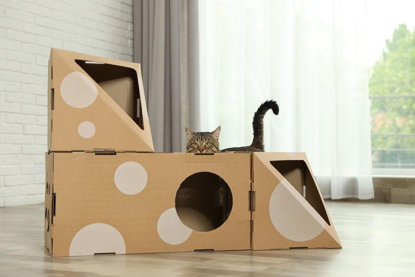 tunnel per gatti
