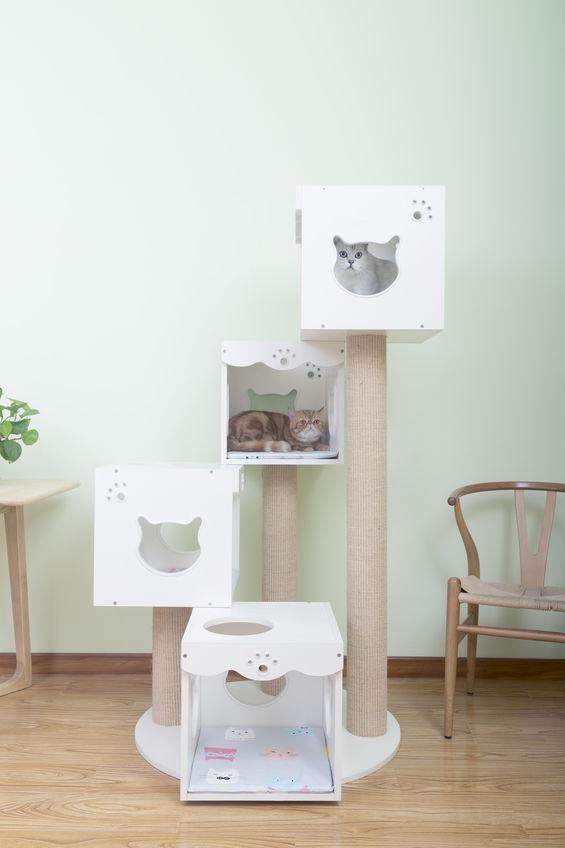 graffiatoi per gatti