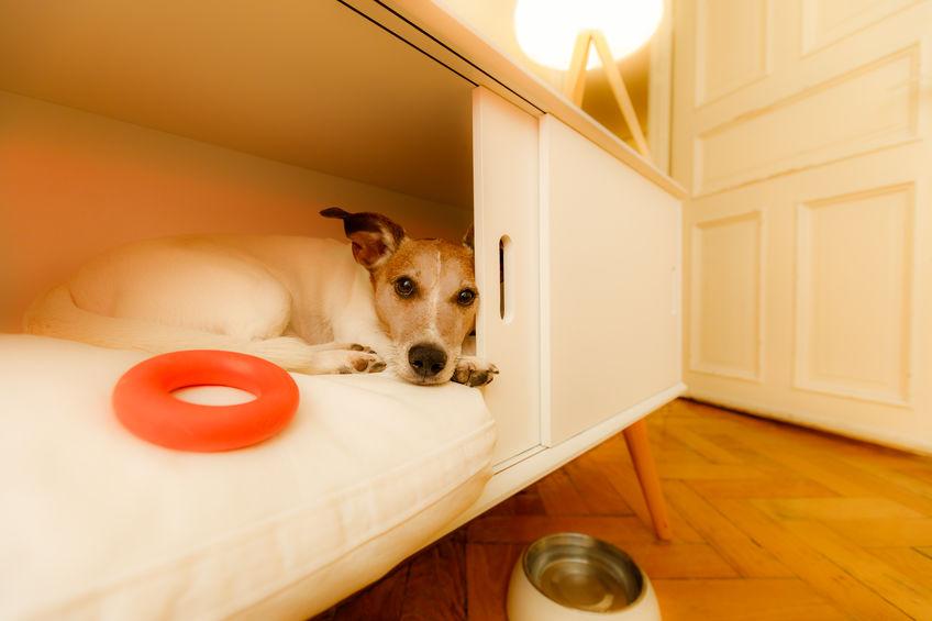 cucce moderne per cani