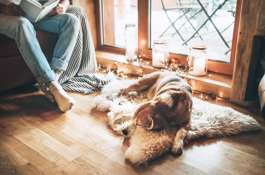 tappeti per cani