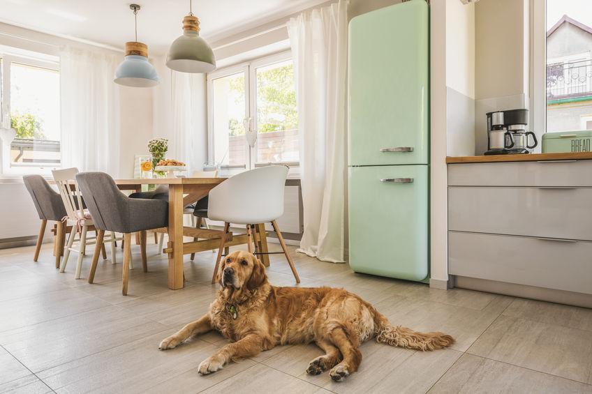 Dove posizionare il frigorifero in casa