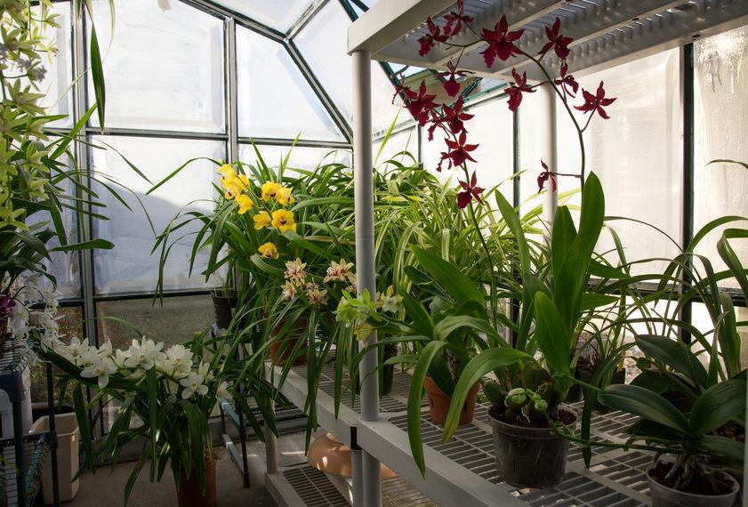 Serra botanica per la casa: scaffali a tutt'altezza