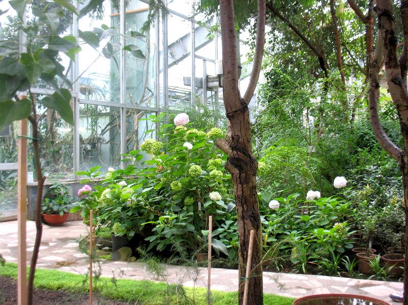 Serra botanica per la casa: costi di realizzazione