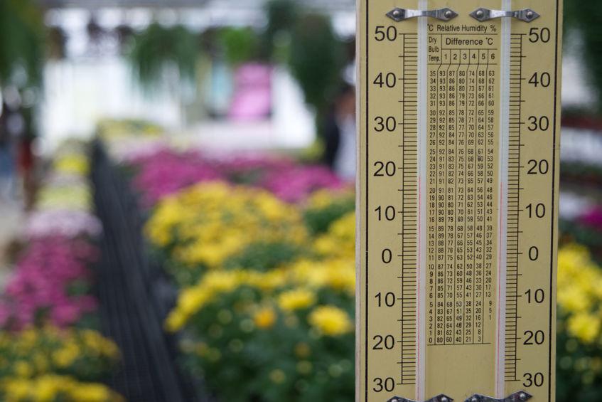 Serra botanica per la casa: budget per la realizzazione