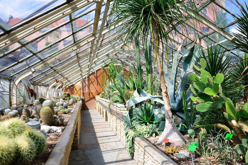 Serra botanica per la casa: tavoli ad hoc per coltivare