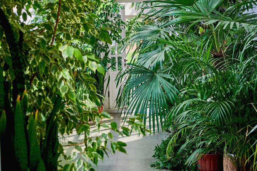 Un giardino botanico da realizzare nella serra di casa