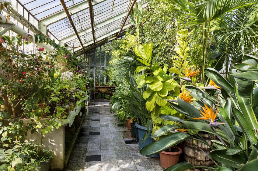 Serra botanica in giardino: coltivare piante meravigliose per la casa