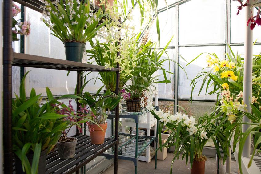 Serra botanica per la casa: una struttura prefabbricata