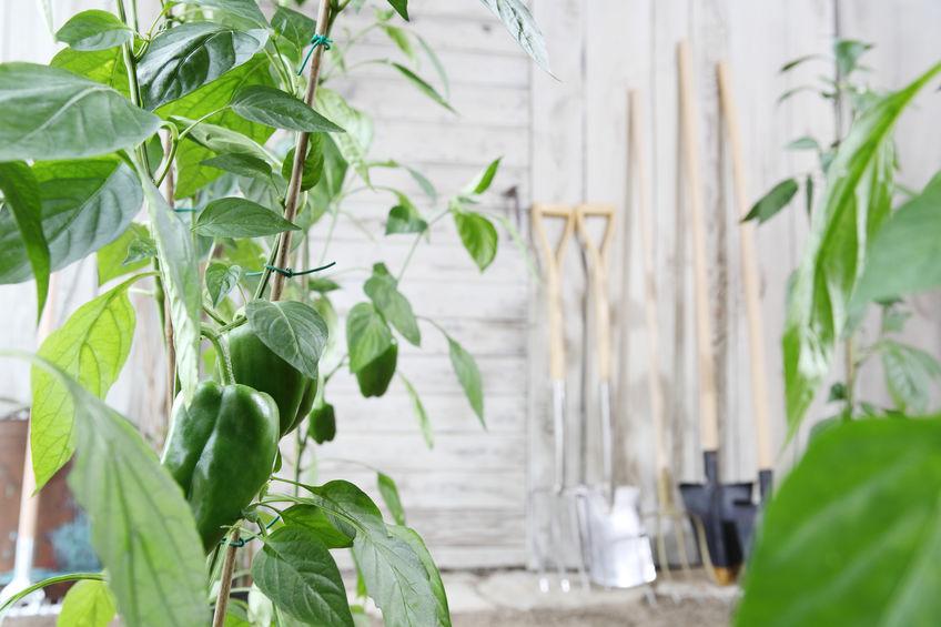 attrezzi per coltivare l'orto