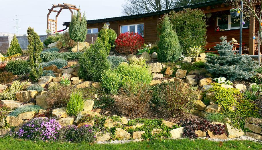 piante per giardino roccioso