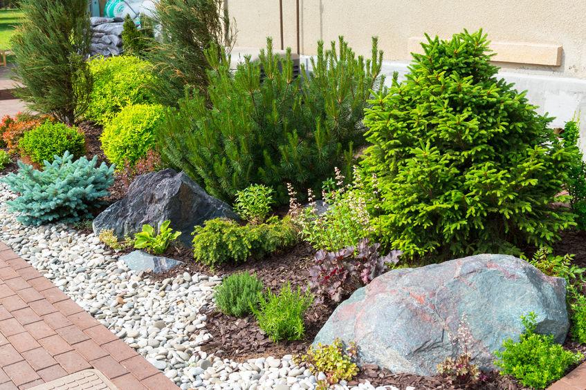 rocce e piante per giardino roccioso
