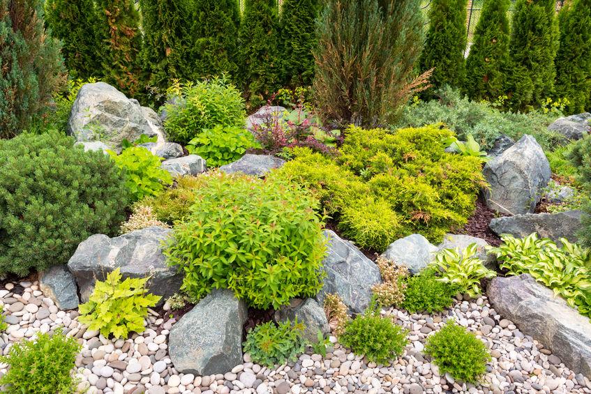 realizzare giardino roccioso