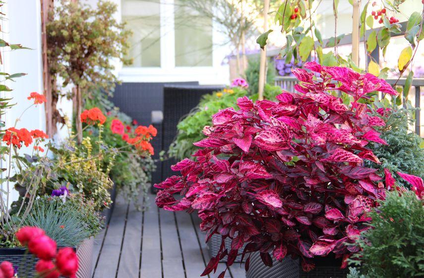 Come decorare un balcone fiorito