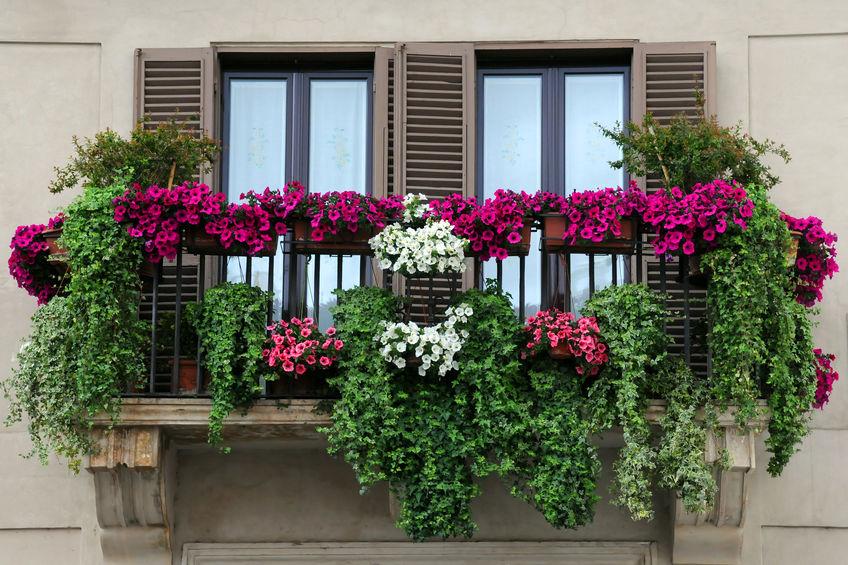 Balconette: fioriere sospese da balcone