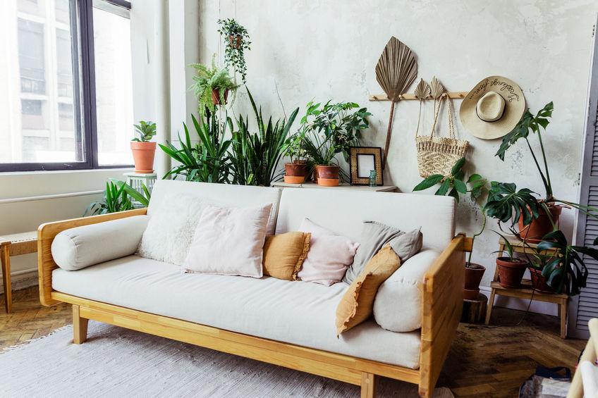 manutenzione piante per interni