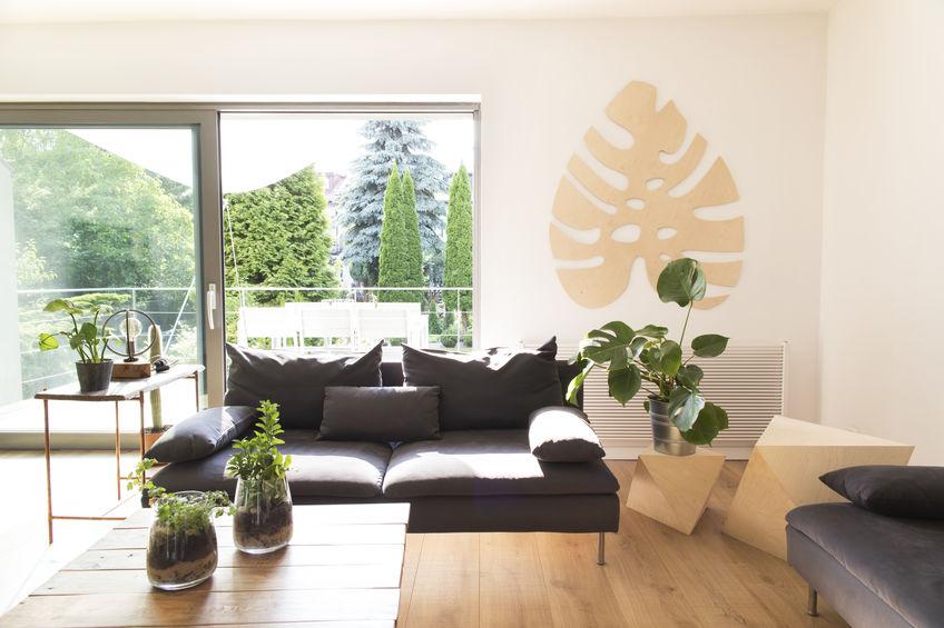 piante sempreverdi per interni