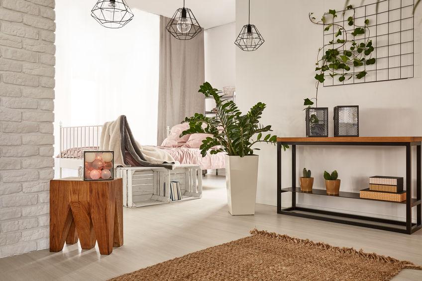 piante aeree per interni