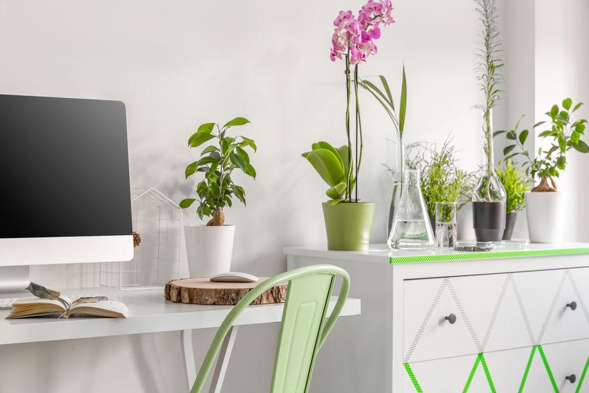 piante piccole e bonsai da interni