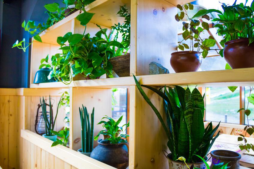 composizione di piante in casa