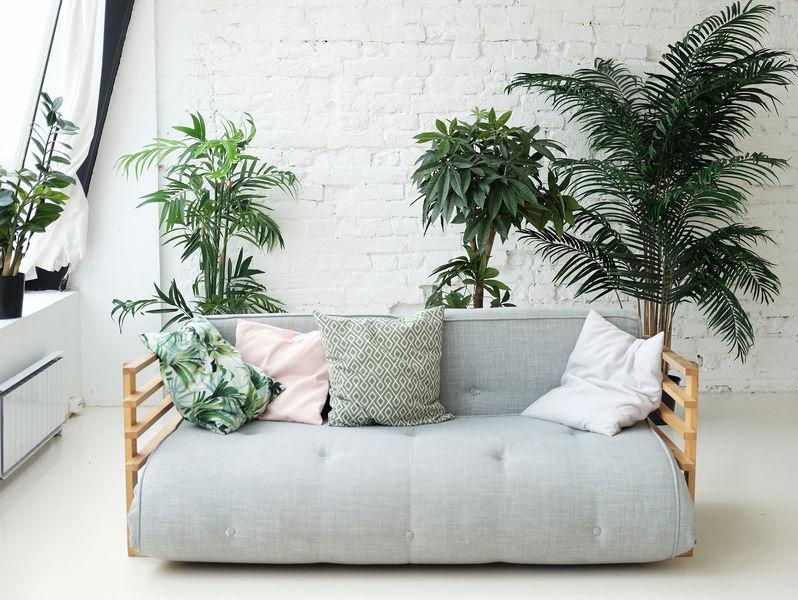 piante maxi da interni