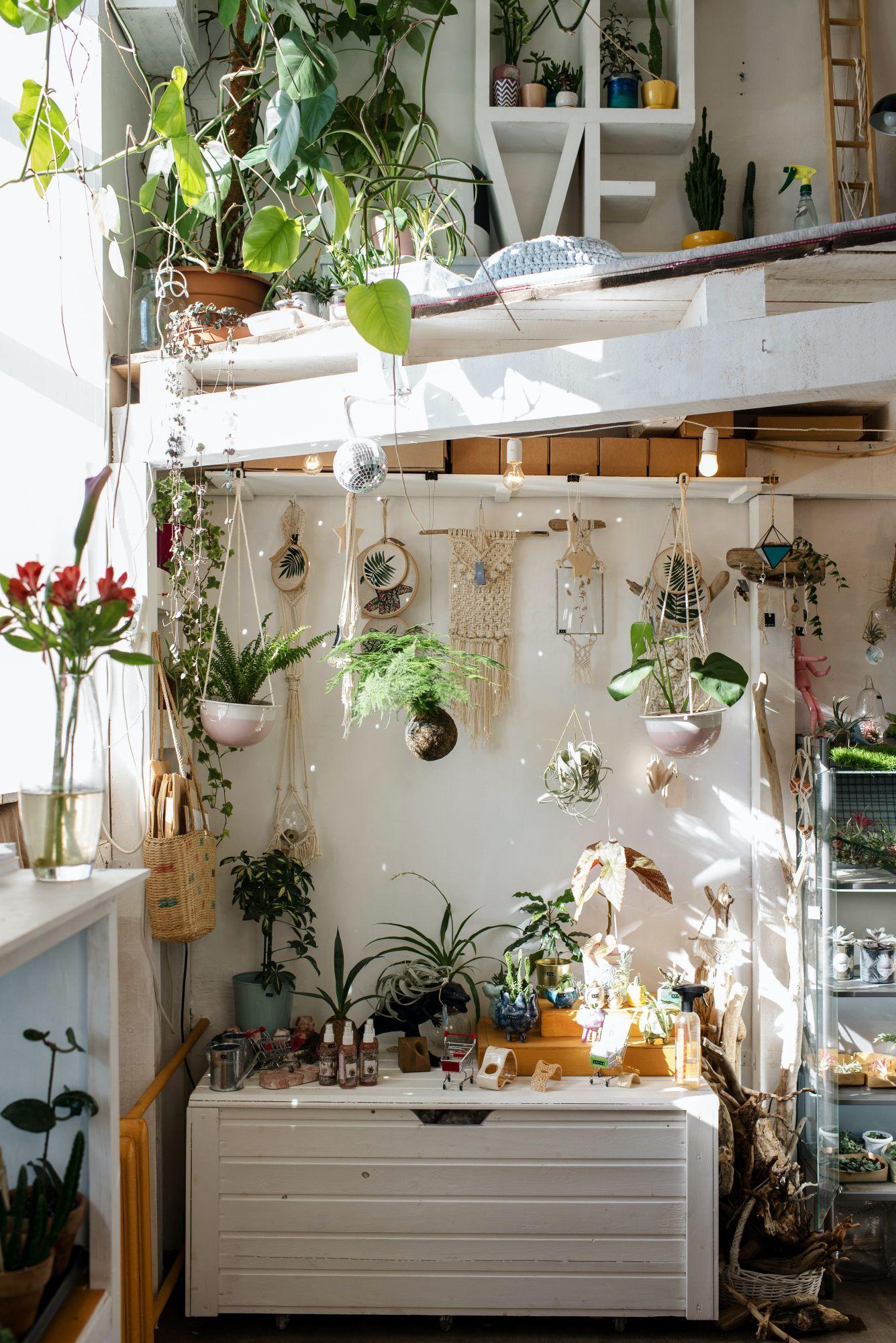 Stile boho jungle: tripudio di piante sempreverdi